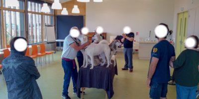 Zou.Loups-Activité-Sport-Nature-Tourisme-Lyon