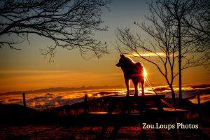 Zou.loups